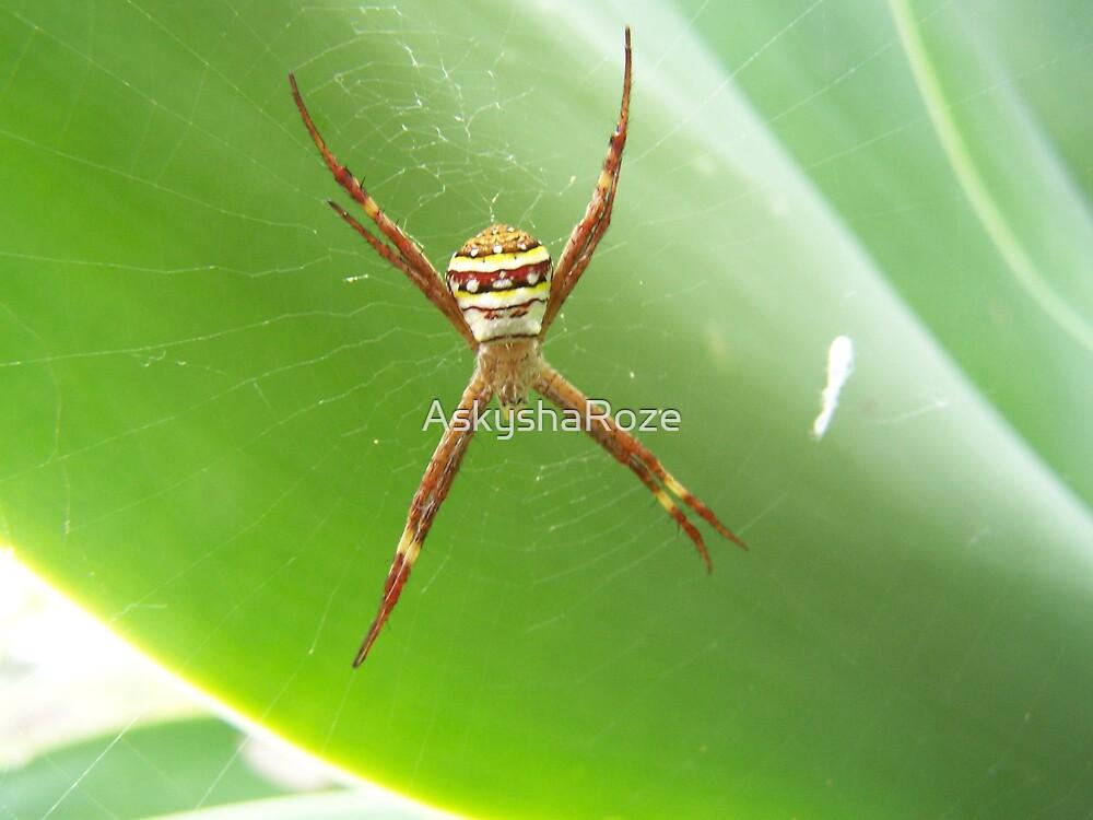 Spider by Kylie  Metz