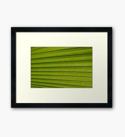 Fern Texture 1 Framed Print