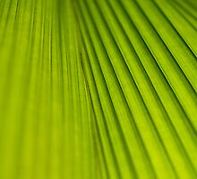 Fern Texture 2 by Mark Snelson