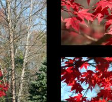 Red Maple Autumn Sticker