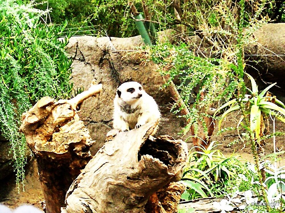 Lemur At The Zoo by shazzagirl