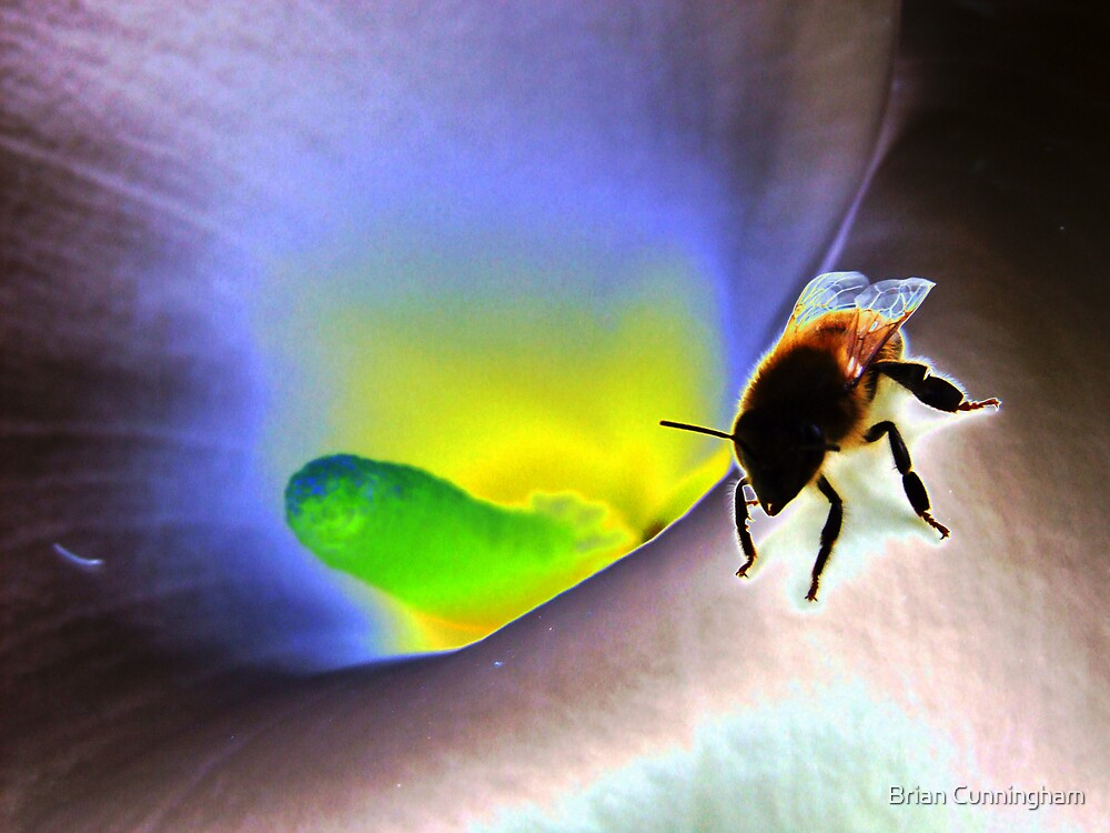 Psychedelic Bee by Brian Cunningham