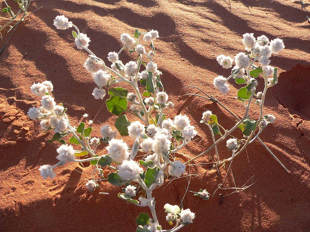 Desert Flowers by Jacko