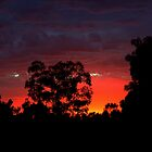 Another Sunrise In The Suburbs by Evita