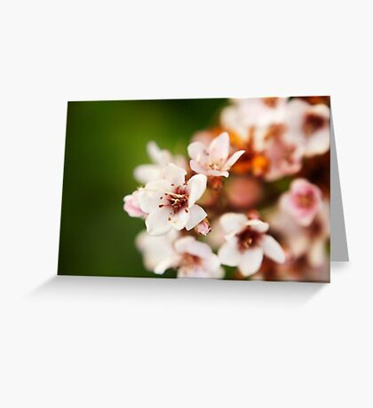 Macro flowers, floral, nature photography Greeting Card