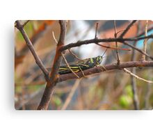 insect on branch Canvas Print