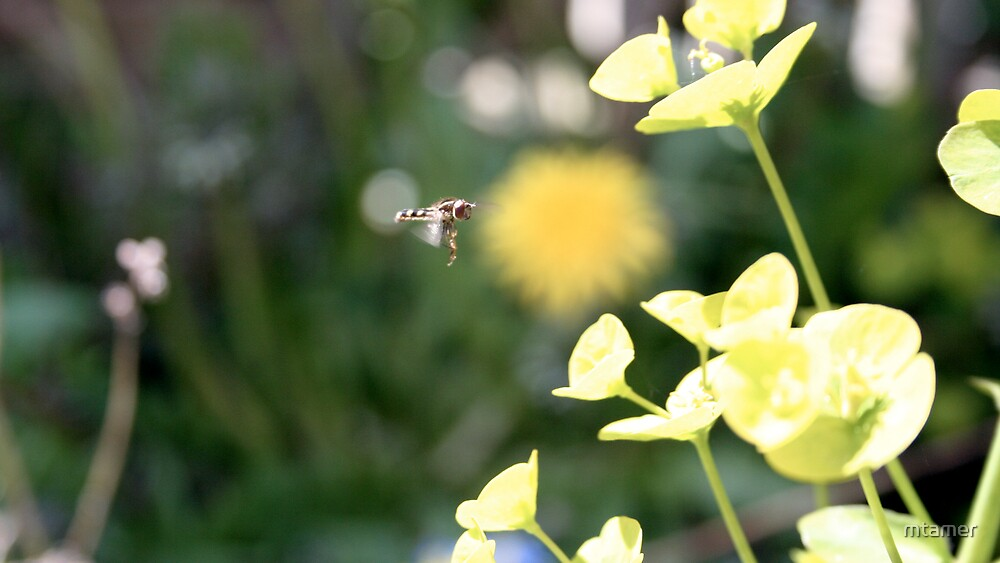 Hover Fly Landing by mtamer
