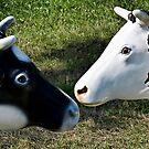 2 cows by Kurt  Tutschek