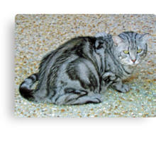 One Beautiful Cat Canvas Print