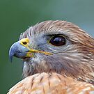 Hawk Profile with Eye Reflection by jozi1