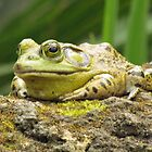 Huge Hoppy Toad by Cynthia48
