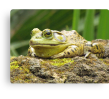Huge Hoppy Toad Canvas Print