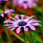 Purple Passion by Luis Correia