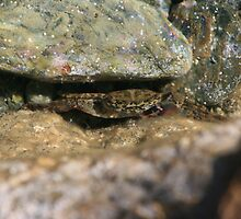Hiding Crab by CharlieT