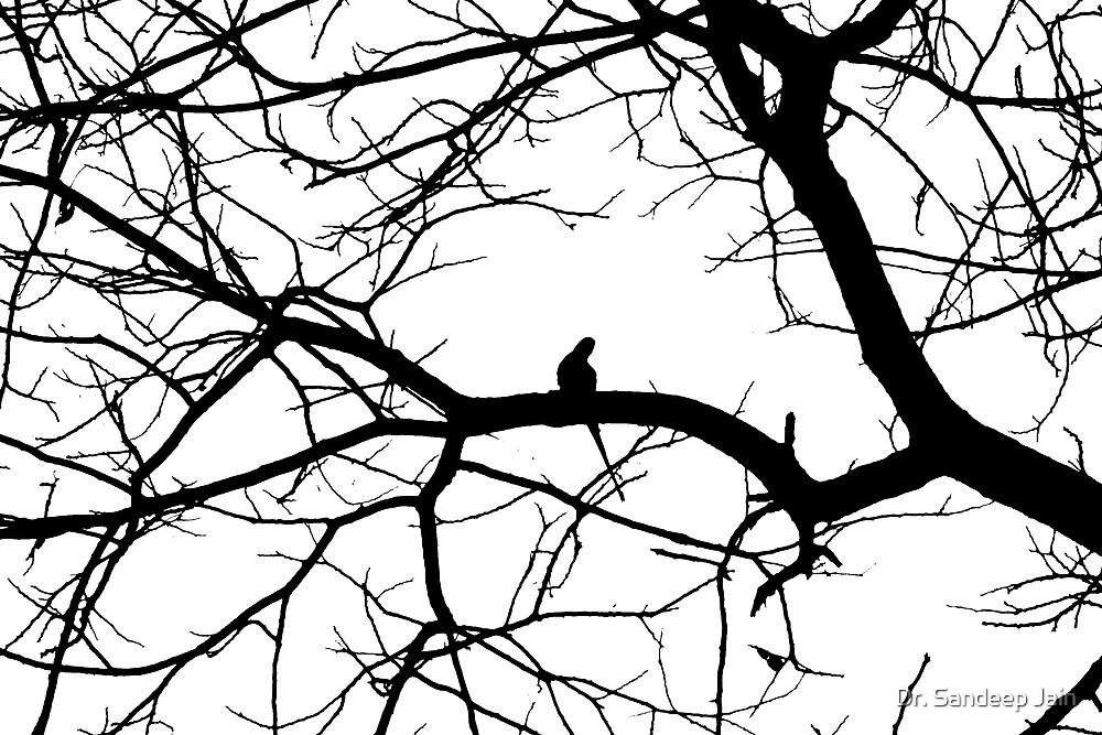 Parrot on a tree by Dr. Sandeep Jain