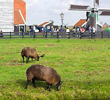 views of the netherlands ….  by Tempe