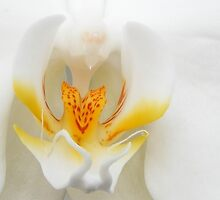 Orchids Smile by Jennifer Vickers
