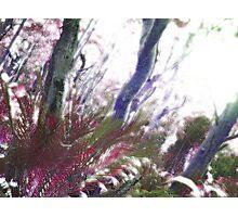 Surreal Bushland Photographic Print