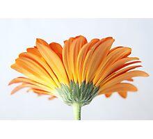 Yellow to orange floral tones Photographic Print