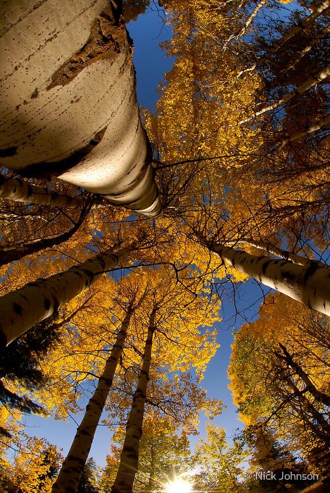 Autumn Aspens by Nick Johnson