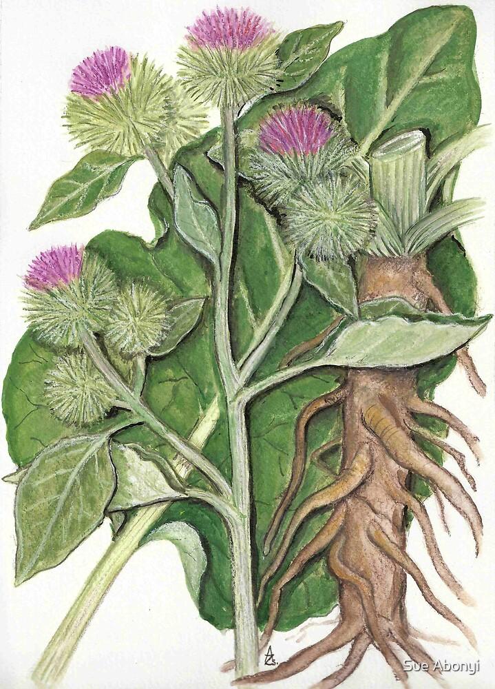 Greater burdock - Arctium lappa by Sue Abonyi