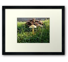 HOW MUSH ROOM DO YOU NEED TO GROW MUSHROOMS? Framed Print