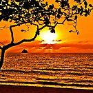 Palm Cove Sunrise by TonyCrehan