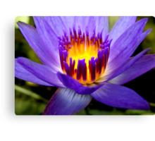 Purple Lotus Canvas Print