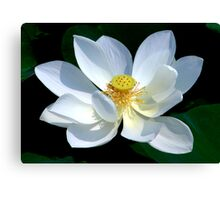 White Lotus Canvas Print