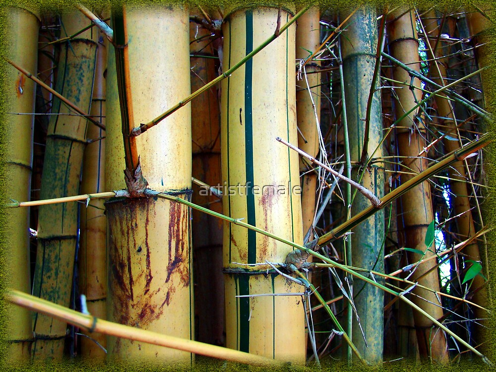Bamboo Three by artistfemale