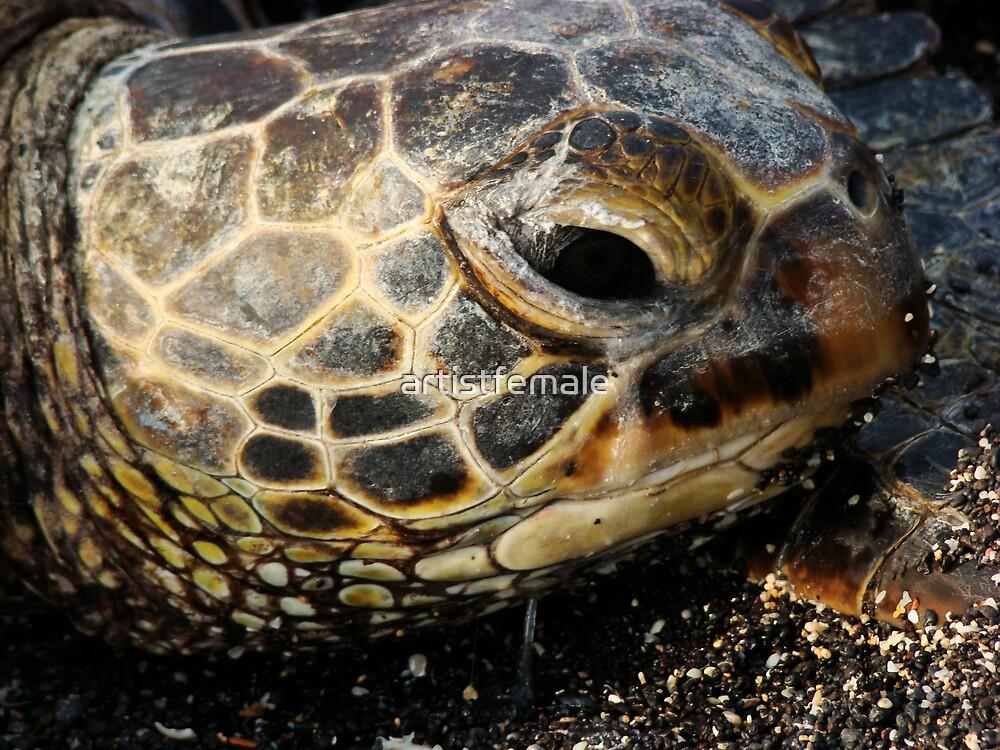 Sea Turtle by artistfemale