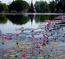 Lotus' and 'Holy Pond' by Dave Lloyd