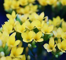 Itty Bitty Yellow Flowers by Sarah Farooqi