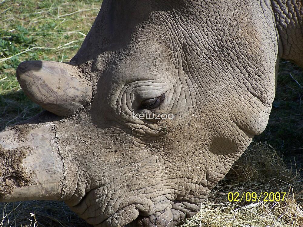 Rhino by kewzoo