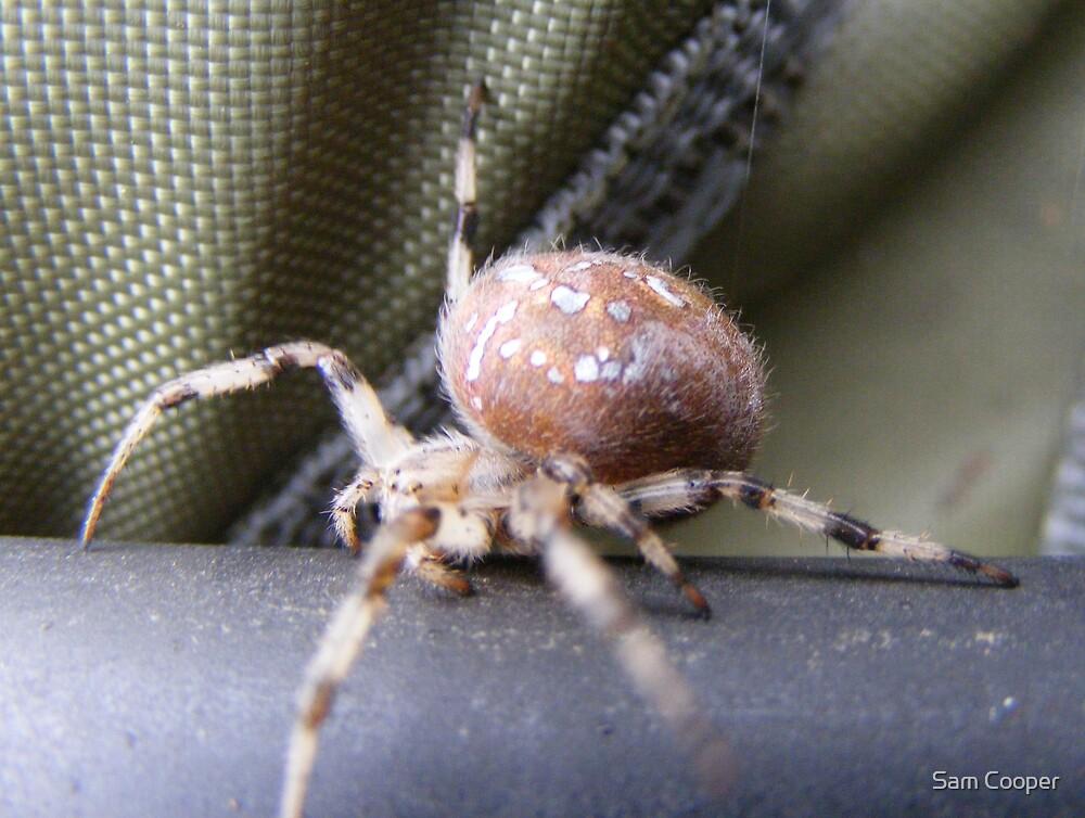 Spider by Sam Cooper