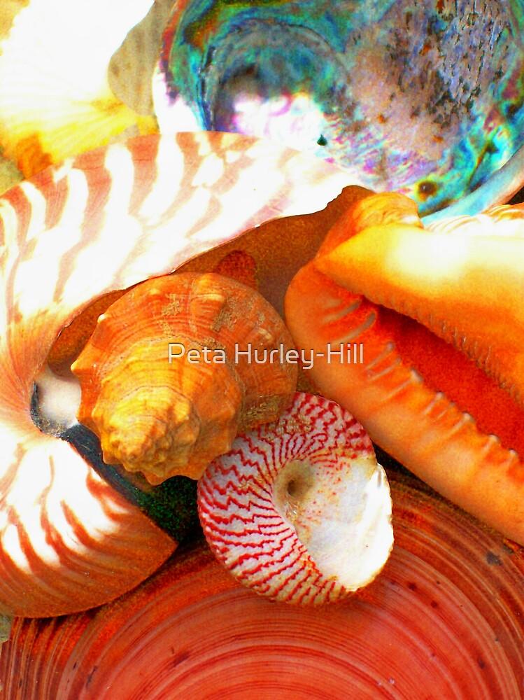 mixed shells by Peta Hurley-Hill