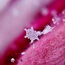 Snowflake & Scarf XVI by Kathleen Daley