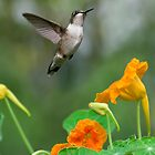 Ruby Throated humming bird by Leisa  Hennessy
