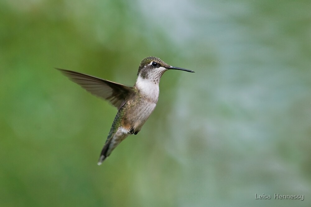 Ruby Throated Hummingbird by Leisa  Hennessy