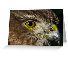 Sharp Shinned Hawk (juvenile) Greeting Card