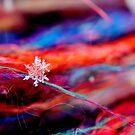 Snowflake & Scarf XVII by Kathleen Daley