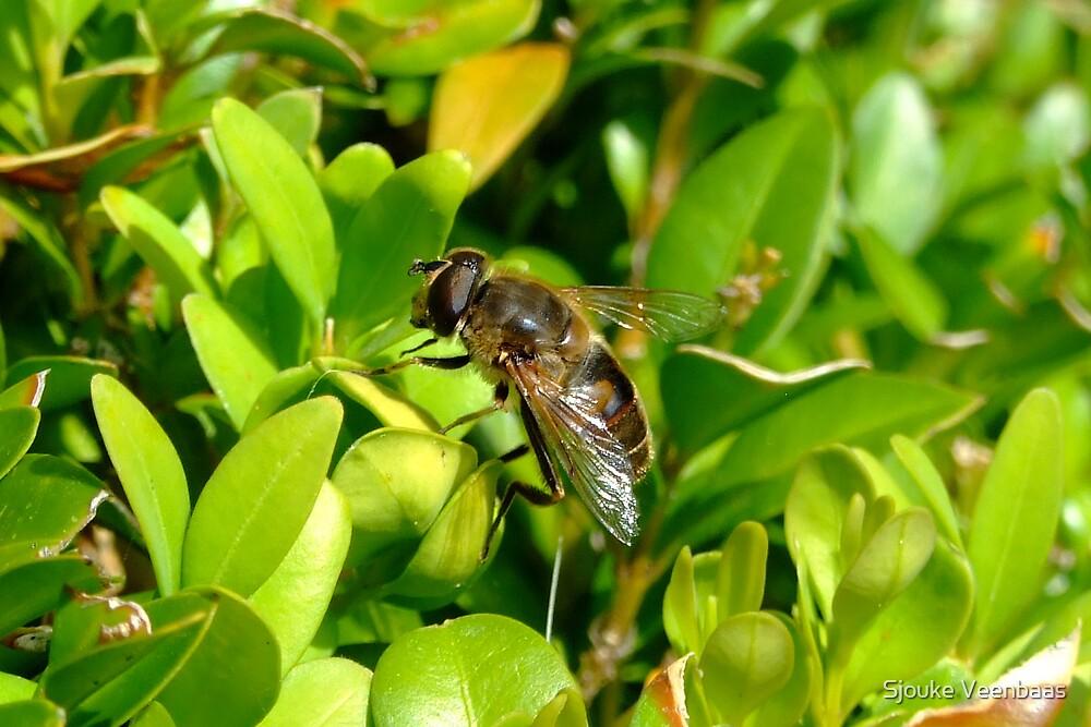 Bee on Green Boxwood by Sjouke Veenbaas