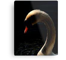 Swan 3 Metal Print