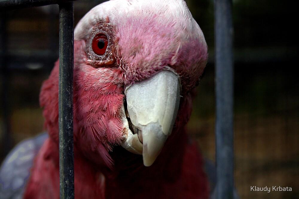 parrot by Klaudy Krbata