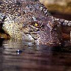 crocodile by Klaudy Krbata