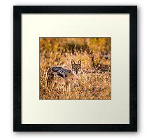 Jackal Etosha National Park Framed Print