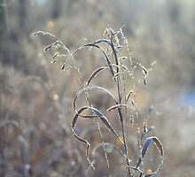 Morning Frost by Roxanne Persson