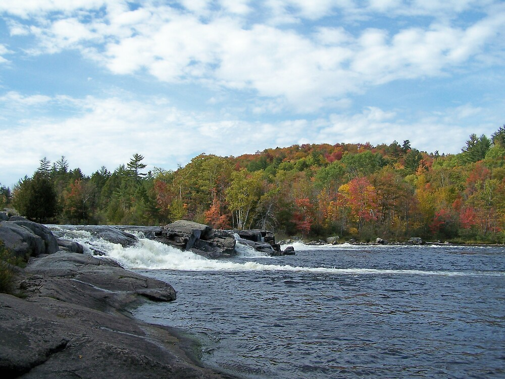 Wooded Fall by Gene Cyr