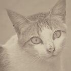Kitty v.6 by tropicalsamuelv