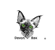 Devon Rex Cat with Title by devonzone